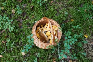 The benefits of magic mushrooms