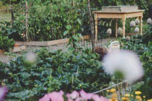 community gardening to heal trauma